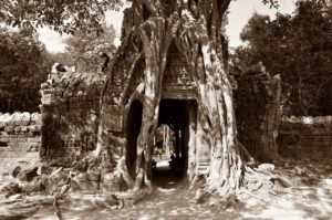 wandering through angkor was